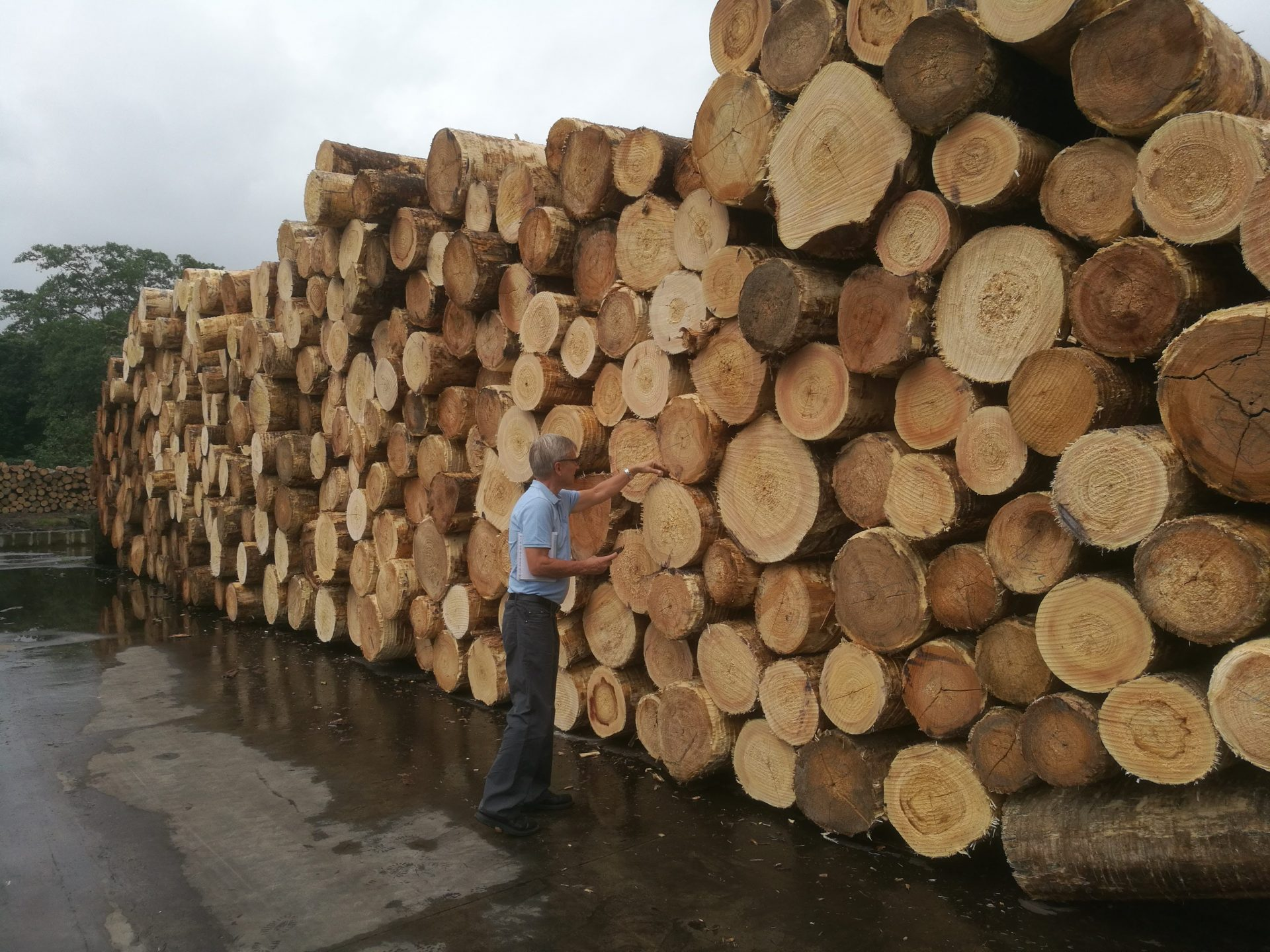 Timo examiningcutanga, a tropicalwood species, atBotrosa plywoodmill in EcuadorEmployer's support is important